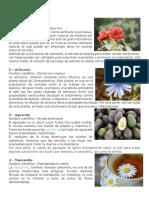 25 Plantas medicinale2