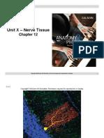 Unit X Power Points Slides - Nerve Tissue