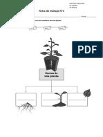 Guia de trabajo las plantas