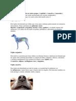 Tejidos animale2