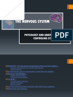 Anfis System Neurologi