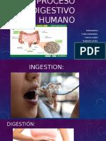 1Proceso digestivo humano