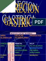 1.4.0-Fisiologia__de_la_secreación_gastrica