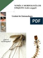 Larvas Adultos Mosquitos