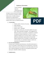 Dysdercus Peruvianus.docx