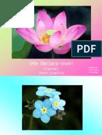 Canto a la vida maya.pps