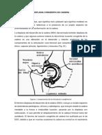 Las Etapas Del Desarrollo Embrionario y Fetal