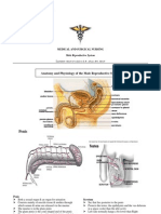 29788324 Male Reproductive System and Diseases