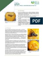 Plagas 36 insectos