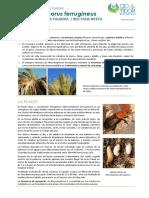 FCP Rhynchophorus Ferrugineus ES Rev02