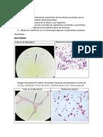 Estructura Celular BCTI