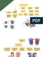 Formación y Posición Del Tubo Cardiaco Esquema