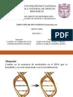Mutagénesis ENCB