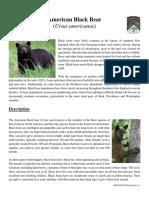Black Bear fact sheet (RI DEM)