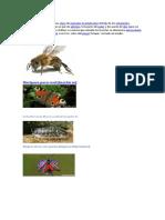 6 Insectos