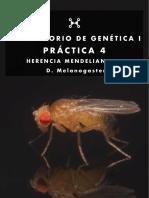 practica4 (1).pdf