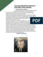 Producción de Lana de Ovejas Merino Argentino en Península Valdés