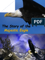 eagle_new  life.ppt