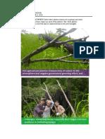 Management of Tree Plantation Photo Reflection