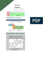 Partes de Un Triglicerido-fosfolipedo Esteroide