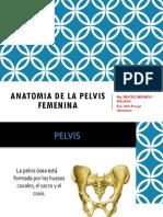 ANATOMIA-DE-LA-PELVIS-FEMENINA.pptx