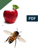 Apple.docx