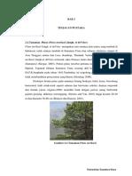 Ttg Pinus Merkusii