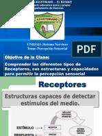2017 Biologia Ppt 3ºM Percepcion Sensorial (1)