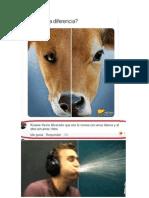 Diferencia entre perro y res