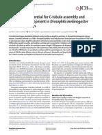 Centrobin is essential for C-tubule assembly and flagellum development in Drosophila melanogaster spermatogenesis