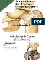 Clase Artrologia Miembro Inferior
