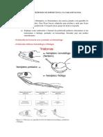 Roteiro de Estudo - Artrópodes (1)