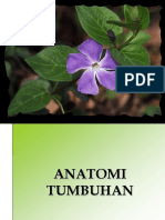44352535-Anatomi-Tumbuhan