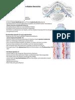 Anatomie Hochcervikal Innervation 1