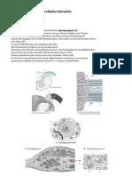 Anatomie Hochcervikal Innervation 2