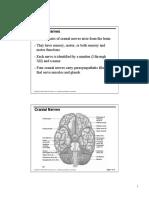 Cranial Nerves Pdf