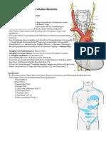 Anatomie Hochcervikal Innervation 7