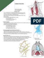 Anatomie Hochcervikal Innervation 11