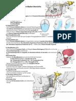 Anatomie Hochcervikal Innervation 13