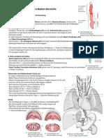 Anatomie Hochcervikal Innervation 16