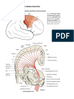 Anatomie Hochcervikal Innervation 18a