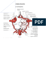 Anatomie Hochcervikal Vaskularisation 6b