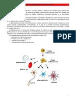 07 Anexo II - Diferenciación Celular