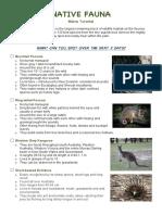 native fauna - jemeiah millar