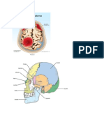 Anatomi Trauma Capitis