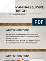 Animals Nutrition - Lawrence