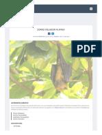 Zorro Volador Filipino Murcia Lagos Informacia n y