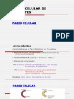 Biologia celular de Procariotes
