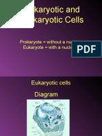 Eukaryotes and Prokaryotes