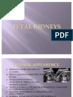 Fetal Kidneys